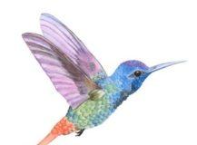 Voyage et écologie… contradictions d'un colibri