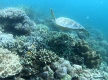 Bornéo 2/3: Plongée à Mabul Island, sommes nous fous?